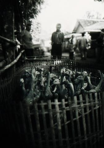 Duck family. Pasar Bebek, Sukoharjo, Central Java, Indonesia